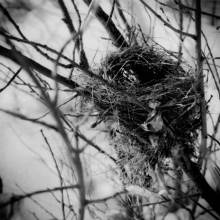 bowview-nest-Edit