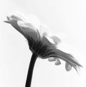 flower-side.jpg