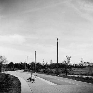 2-geese.jpg